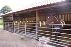 Large open outdoor livestock pens